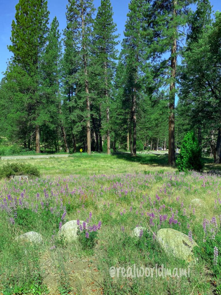 Yosemite Wild Flowers